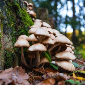 Funghi prostata