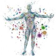 microbiota tumore prostata